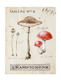 Nature's Mushrooms Prints by Angela Staehling