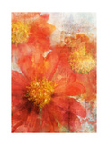 Tithonia Bloom 2 Premium Giclee Print by Ken Roko