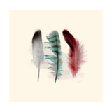 Three Feather Study 1 Giclee Print by Evangeline Taylor