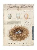 Nature's Nest Giclee-trykk av Angela Staehling