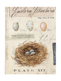 Nature's Nest Poster von Angela Staehling