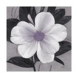 Sorbet Bloom 1 Giclee Print by Ivo Stoyanov