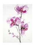 Orchids 1 Giclée-Premiumdruck von Karin Johannesson