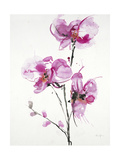 Orchids 1 Poster by Karin Johannesson