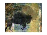 Bison 1 Giclee Print by Starlie Sokol-Hohne