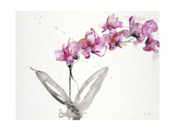 Orchids 2 Prints by Karin Johannesson