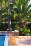 Palm Tree Near a Pool Photographic Print by Laetitia Julien