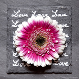 Multicolor Gerbera on Slate Photographic Print by Leon Le Baron