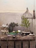 Ferns in Cage Fotografie-Druck von Leon Le Baron
