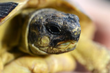 Turtle Head Macro Photographic Print by Laetitia Julien