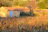 Cabanon with Blue Shutters in a Vineyard in Provence France Photographic Print by Laetitia Julien