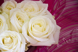 Bouquets of White Roses in Her Pink Gift Paper Photographic Print by Laetitia Julien