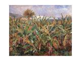 Field of Banana Trees Reproduction procédé giclée par Pierre-Auguste Renoir