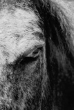 Glare of a Horse in Black and White Photographic Print by Laetitia Julien