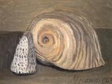 Shells Lámina giclée por Giorgio Morandi