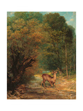 The Hunted Roe Deer on the Alert Giclee Print by Gustave Courbet