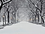 Central Park in Winter Art by Rudy Sulgan