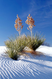 Yuccas & White Sand I Photographic Print by Douglas Taylor