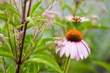 Wildblumen I Fotografie-Druck von Beth Wold