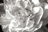 Fancy Flower II Fotodruck von Alan Hausenflock