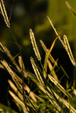 Grasses II Photographic Print by Beth Wold