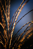 Grasses I Photographic Print by Beth Wold