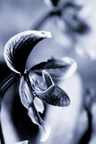 Orchid IV Photographic Print by Beth Wold