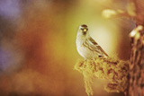 Sing in the Sun Photographic Print by Roberta Murray