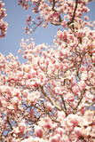 In Bloom IV Photographic Print by Karyn Millet
