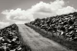 Fields of Sorrow II Photographic Print by Alan Hausenflock
