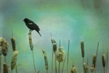 Perched Photographic Print by Roberta Murray