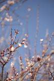 In Bloom IX Photographic Print by Karyn Millet