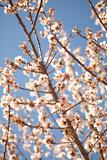 In Bloom VII Photographic Print by Karyn Millet