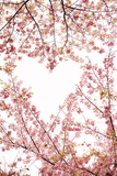 Heart in the Trees I Photographic Print by Karyn Millet