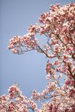 In Bloom VI Photographic Print by Karyn Millet
