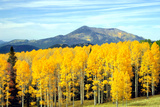 Aspens of Autumn I Photographic Print by Douglas Taylor