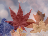 Leaf Patterns II Photographic Print by Kathy Mahan