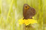 Weeds Make Nectar Photographic Print by Roberta Murray