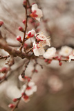 In Bloom XI Photographic Print by Karyn Millet