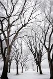 Frosted Trees I Fotografisk tryk af Beth Wold