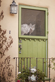 Kitty in the Window Photographic Print by Karyn Millet