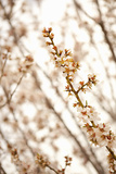 In Bloom XIV Photographic Print by Karyn Millet