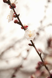 In Bloom XIII Photographic Print by Karyn Millet