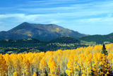 Aspens of Autumn II Photographic Print by Douglas Taylor