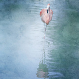 Pink Flamingo Photographic Print by Roberta Murray