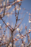 In Bloom X Photographic Print by Karyn Millet