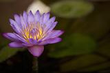 Macro Bloom VI Photographic Print by Karyn Millet