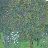 Rosebushes under the Trees Reproduction procédé giclée par Gustav Klimt