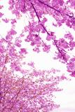 Bright Blooms I Fotodruck von Karyn Millet