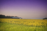 Flowering Fields Photographic Print by Roberta Murray